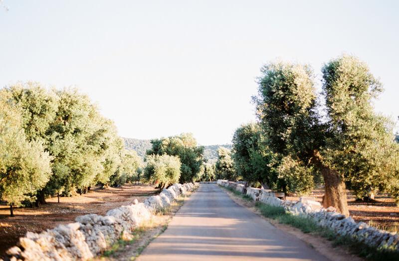 olivenbaeume-allee-apulien
